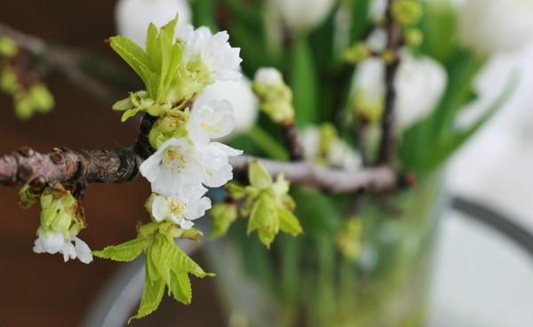 bloemen en natuur